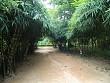 Thiên đường lạc lối vào rừng tre núi Sơn Trà