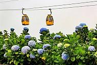 Du lịch Đà Nẵng- Bà Nà bốn mùa rực rỡ sắc hoa