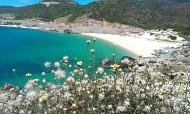 Vẻ đẹp hoang sơ Bãi Chuối