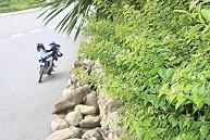 Tour Du Lịch Đà Nẵng 2 Ngày: Đà Nẵng - Huế  - Suối Khoáng Thanh Tân
