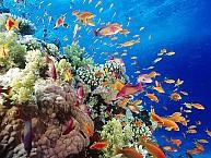 VDN32T: Tour Du Lịch Hà Nội- Đà Nẵng- Bà Nà- Biển Mỹ Khê- Hội An 3N4Đ
