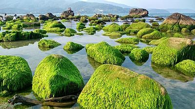 Đẹp mê hồn mùa rêu xanh mướt tại rạn Nam Ô Đà Nẵng
