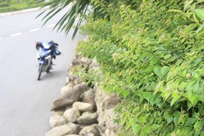 Hoàng Sa – con đường đẹp như tranh vẽ ở Đà Nẵng