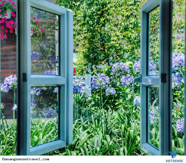Du lịch Đà Nẵng- Bà Nà ngắm những loài hoa đua nở - Ảnh 10