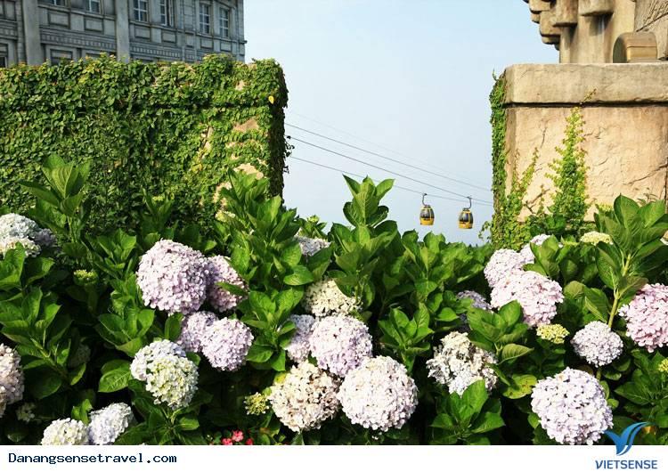 Du lịch Đà Nẵng- Bà Nà ngắm những loài hoa đua nở - Ảnh 9