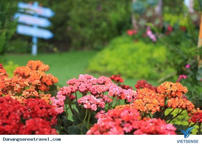 Du lịch Đà Nẵng- Bà Nà ngắm những loài hoa đua nở - Ảnh 8