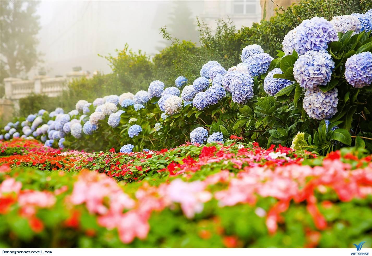 Du lịch Đà Nẵng- Bà Nà ngắm những loài hoa đua nở - Ảnh 2