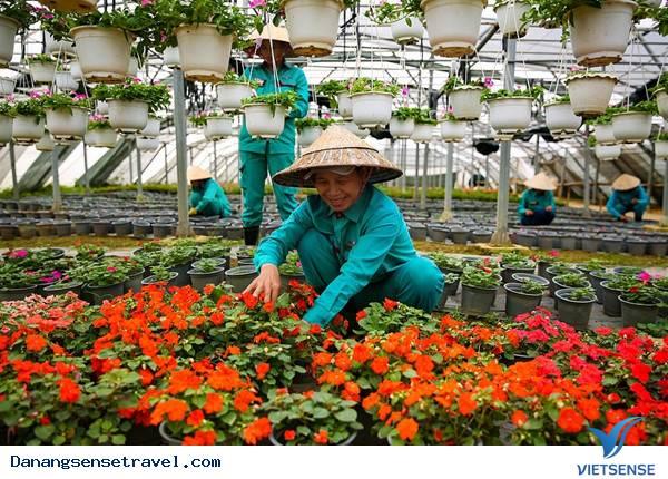 Du lịch Đà Nẵng- Bà Nà ngắm những loài hoa đua nở - Ảnh 7