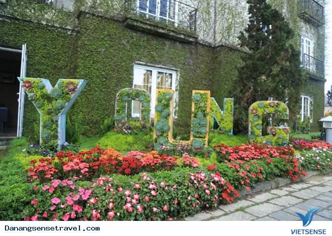 Du lịch Đà Nẵng- Bà Nà ngắm những loài hoa đua nở - Ảnh 11