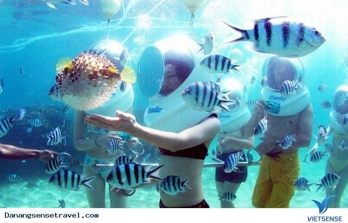 Du lịch Đà Nẵng đi bộ dưới đáy biển Cù Lao Chàm