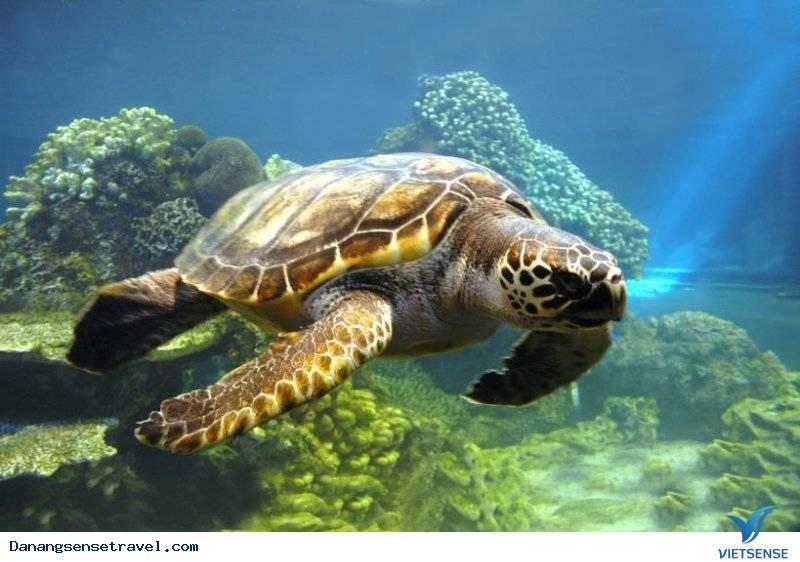 khu bảo tồn rùa biển tại Cù Lao Chàm