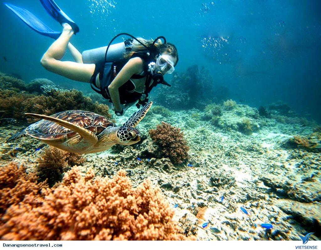 Muốn khám vẻ đẹp dưới lòng đại dương hãy đến Cù Lao Chàm