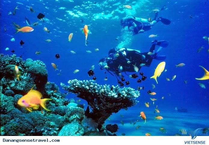Tour lặn biển ngắm san hô Cù Lao Chàm